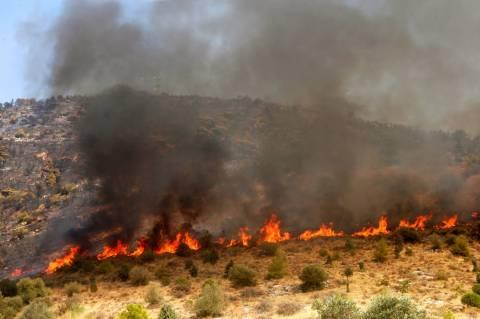 Μεγαλόπολη: Υπό έλεγχο τέθηκε η πυρκαγιά
