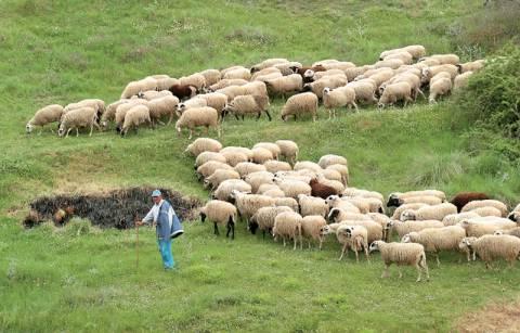 Με συνέχιση των κινητοποιήσεων απειλούν οι κτηνοτρόφοι