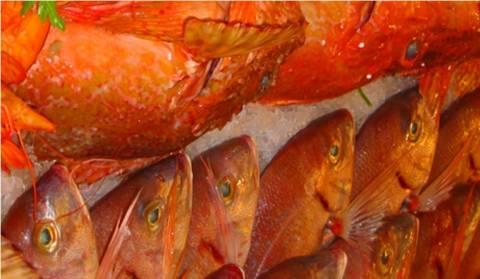ΣΕΘ:Θα «βυθιστεί» η ρωσική αγορά ψαριού λόγω εμπάργκου