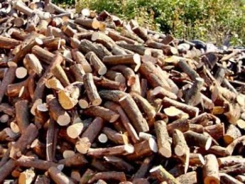 Μείωση της παραγωγικής δραστηριότητας για τη βιομηχανία ξυλείας στην Ελλάδα