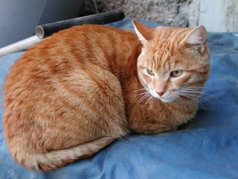 Αιδηψός: Κακοποίησε γάτα και συνελήφθη - Δείτε φωτό
