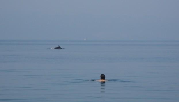 Απρόσκλητοι αλλά όμορφοι επισκέπτες στην παραλία Αφήσσου