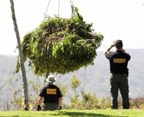 Καλιφόρνια: Καλλιεργούσαν κάνναβη 5 εκ. δολαρίων σε δημόσιο πάρκο!