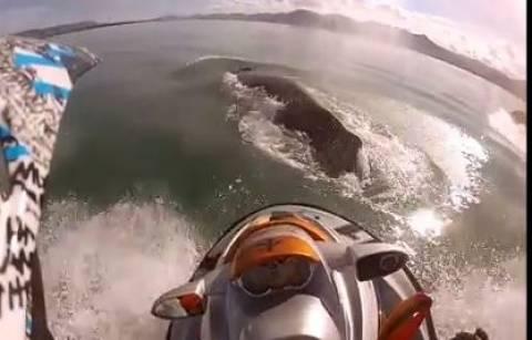 Τζετ σκι συγκρούεται με φάλαινα (vid)