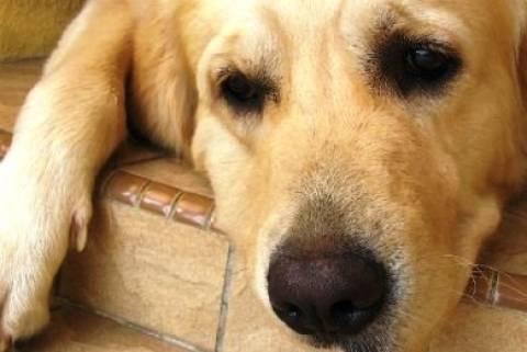 Κως: Στο αυτόφωρο ιδιοκτήτης σκύλου που το άφησε χωρίς φαγητό & νερό για να πεθάνει
