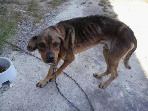 Κως: 12μηνη φυλάκιση και 5.000€ πρόστιμο για εγκατάλειψη σκύλου (pic)