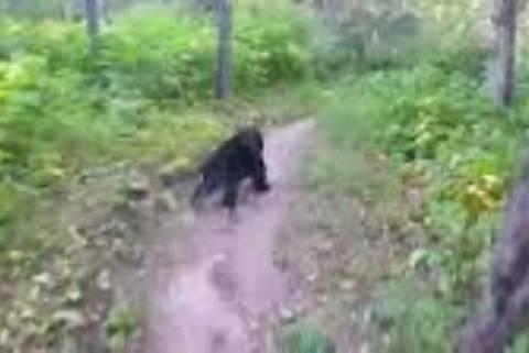 Καναδάς: Αρκούδα βγήκε στη στροφή ποδηλάτη! (video)