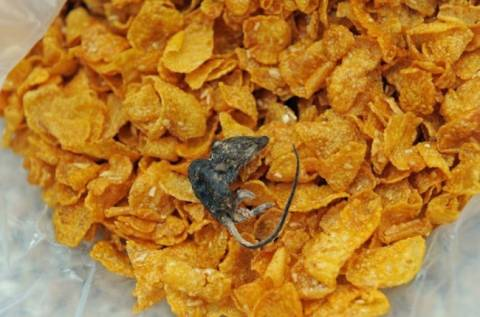 Αηδία! Βρήκε στα δημητριακά της και ένα... ποντίκι! (pic)