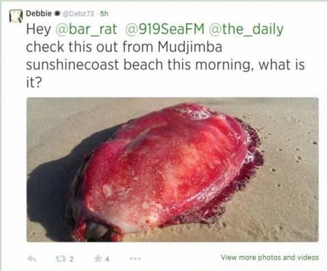 Δείτε την περίεργη, άμορφη, κόκκινη μάζα που ξεβράστηκε σε παραλία (pics)
