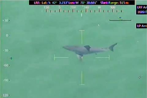 ΗΠΑ: Τεράστιος καρχαρίας ξύπνησε μνήμες από το Jaws! (video+photos)