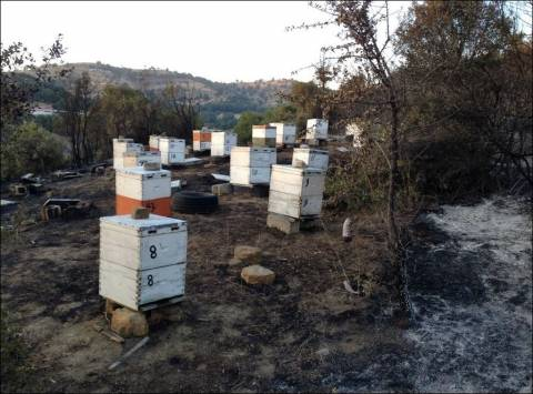 Τρίκαλα: Πρωτοφανής καταστροφή – Κάηκαν περίπου 40.000 στρέμματα