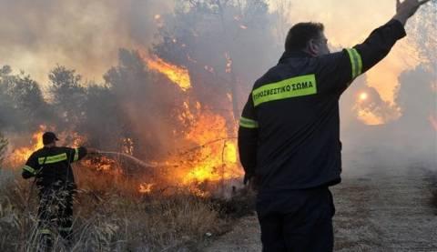 Μαγνησία: Μεγάλη η πυρκαγιά στην Πέρδικα - Κάηκαν περίπου 1300 στρέμματα