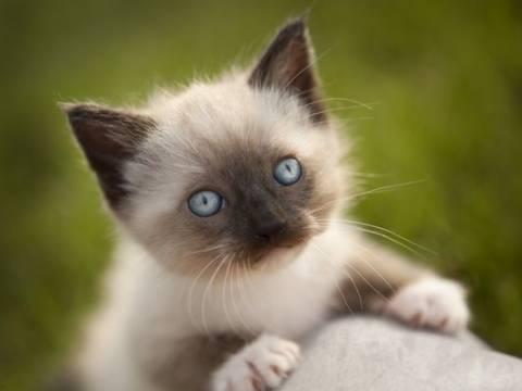 Η γάτα που ζει δύο ζωές!