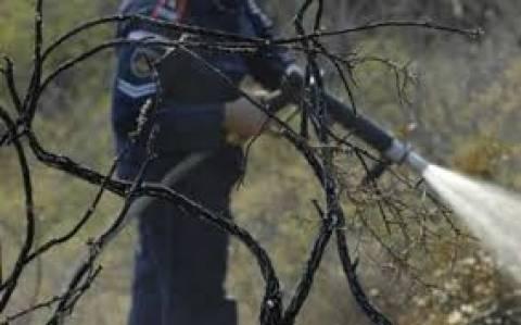 Τουλάχιστον 3.000 στρέμματα έγιναν στάχτη στην Κίσαμο (vid)