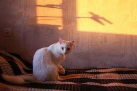 Αιδηψός: Νέα θηριωδία σε γάτα από 55χρονο–«Σκληραίνουν» οι ποινές (pic)