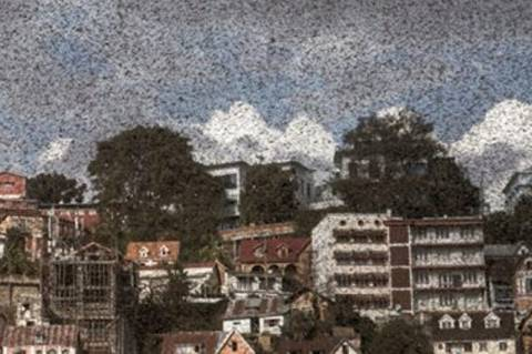 Σκηνές Αποκάλυψης: Ακρίδες σκόρπισαν τον τρόμο στη Μαδαγασκάρη! (video)