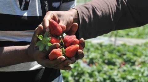Guardian: Δεν έχει αλλάξει τίποτα στα χωράφια με τις φράουλες