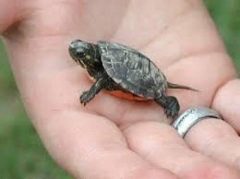 8χρονος έκρυψε στο... σώβρακο του μία χελώνα! (pic)