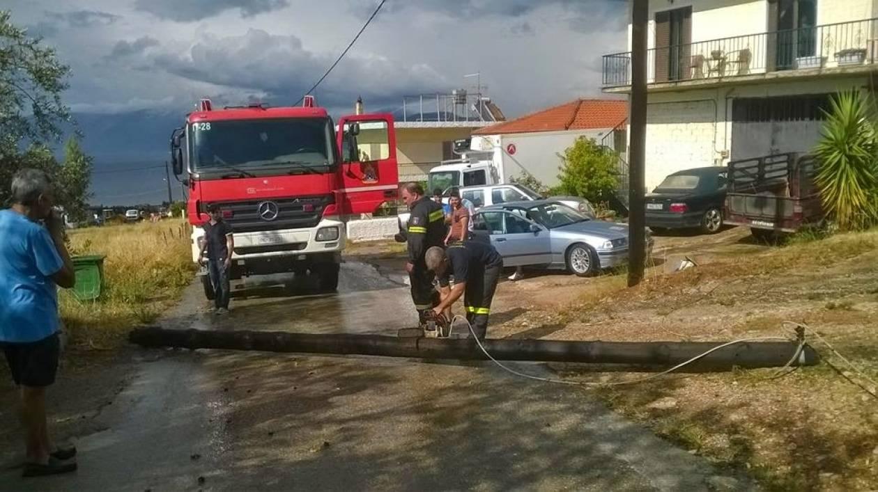 Εύβοια: Ανεμοστρόβιλος ξερίζωσε δέντρα-«Από τύχη δε θρηνήσαμε θύματα» (pic)