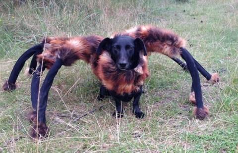 Ένας σκύλος… ταραντούλα! (video)