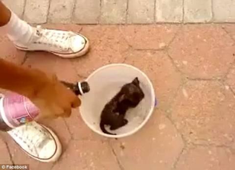 Facebook: Αρνήθηκε να κατεβάσει βίντεο με μία καμμένη γάτα (pics)