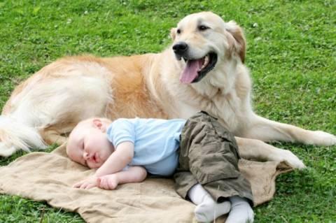 Ο ύπνος πάνω σε ζώα μειώνει τον κίνδυνο άσθματος για τα μωρά