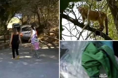 Εξάχρονο αγόρι δέχτηκε επίθεση από λιοντάρι