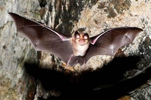 ΗΠΑ: Νυχτερίδα προκάλεσε πανικό σε τηλεοπτικό στούντιο! (vid)