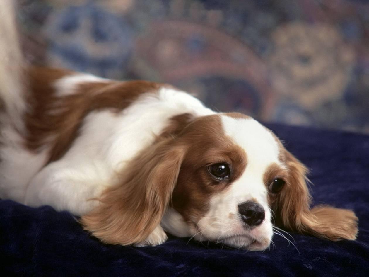 Αιτωλοακαρνανία: Στο αυτόφωρο 45χρονος για κακοποίηση σκύλου