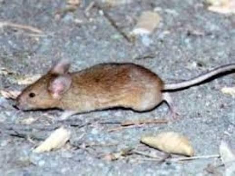 Ποντίκια επιτέθηκαν σε τρίχρονο ενώ κοιμόταν (σκληρές εικόνες)