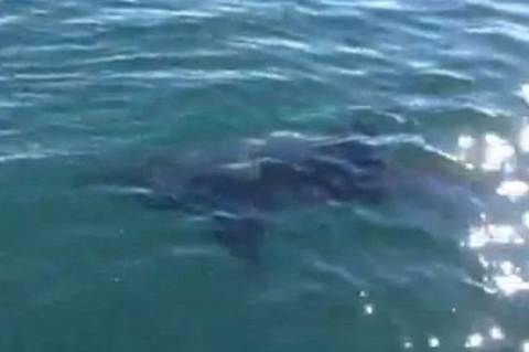 Δείτε τη στιγμή που ψαράς εντοπίζει λευκό καρχαρία (βίντεο)
