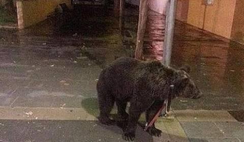 Έδεσε την αρκούδα έξω από την παμπ και πήγε για μπυρίτσα... (pic)