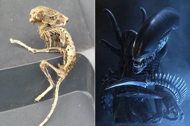 Βρετανία: Ανακάλυψε «alien» στην κουζίνα του σπιτιού του! (pics)