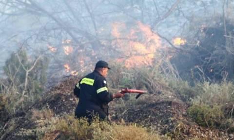 Κρήτη: 25 στρέμματα έγιναν στάχτη από τη φωτιά στο Αμάρι