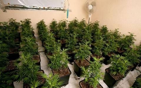 Ρέθυμνο: Συνελήφθησαν για καλλιέργεια δενδρυλλίων κάνναβης και κατοχή ναρκωτικών ουσιών