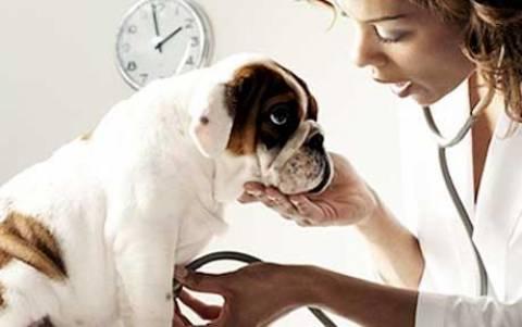 Κτηνίατροι ποζάρουν γυμνοί με τα... ζώα τους (pics)