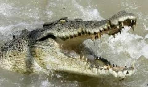 Ο κροκόδειλος είδε τον... μεθυσμένο και φοβήθηκε (pics+ video)