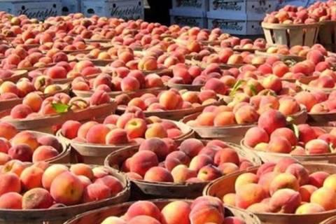 ΕΕ: Επιπλέον οικονομική βοήθεια στους γεωργούς που επλήγησαν από τη ρωσική απαγόρευση