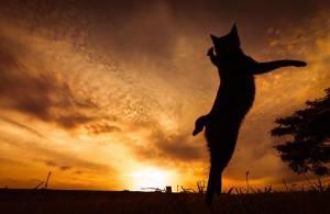 Οι γάτες – νίντζα που «σαρώνουν» το διαδίκτυο