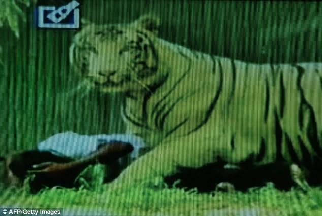 Νέο Δελχί: Η φρικιαστική στιγμή που τίγρη κατασπάραξε νεαρό (pics+vid)
