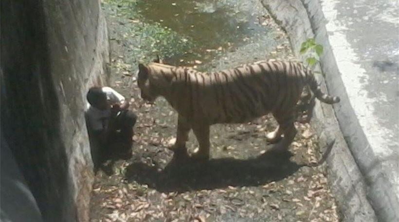 Νέο συγκλονιστικό video λίγο πριν η τίγρη κατασπαράξει τον 22χρονο