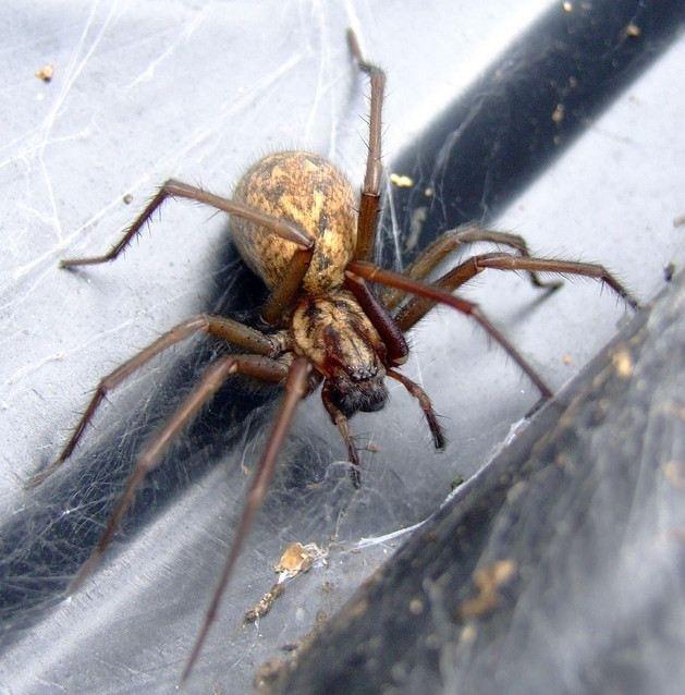 Τη δάγκωσε αράχνη για δεύτερη φορά! (προσοχή: σκληρές εικόνες)