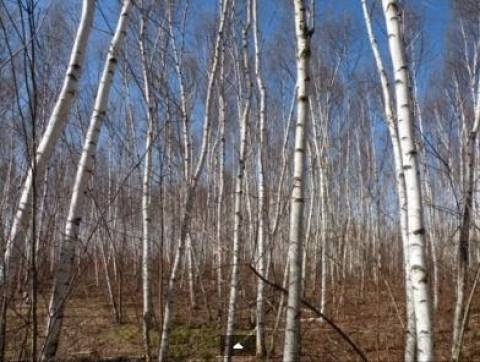 Βίντεο: Κατέγραψε τις κραυγές μυθικού τέρατος στο δάσος
