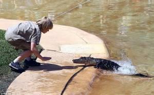 Κροκόδειλος κόντεψε να δαγκώσει τον γιο του... κροκοδειλάκια (pics)