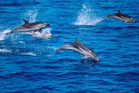 Πήλιο: Ξεβράστηκε νεκρό δελφίνι στην παραλία Χόρτου (pic)