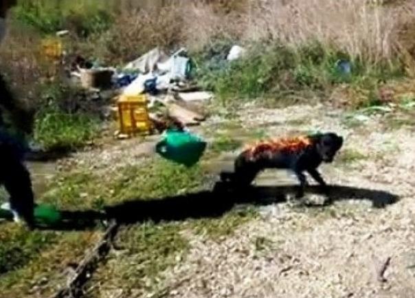 Τρεις ανήλικοι οι δράστες που έκαψαν ζωντανό σκύλο (pic)