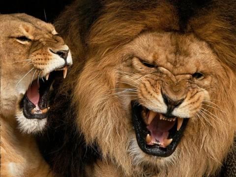 Σε τρομακτικά επίπεδα ο αφανισμός των άγριων ζώων