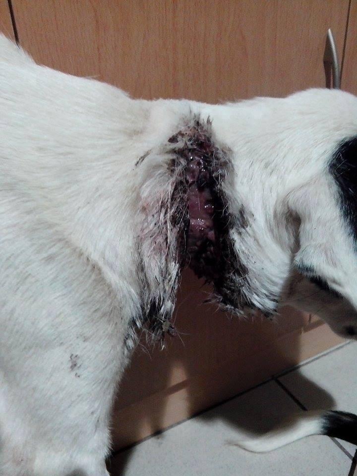 ΠΡΟΣΟΧΗ: Σοκάρουν οι εικόνες-Σκύλος ήταν δεμένος με σύρμα σε δέντρο για 10 μέρες