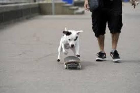 Σκύλος έτοιμος για... Όσκαρ ερμηνείας (βίντεο)