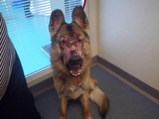 Απάνθρωπο: ΄Αφησαν το σκύλο τους να πεθάνει (πολύ σκληρές εικόνες)